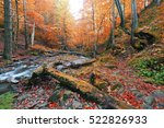 Autumn River In Forest  Asia...
