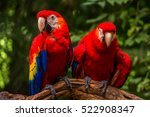two parrots friends sit on the... | Shutterstock . vector #522908347