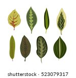 exotic tropical leaves isolated ... | Shutterstock .eps vector #523079317