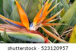 close up of beautiful bright...   Shutterstock . vector #523120957