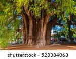 the tree of tule  el arbol de... | Shutterstock . vector #523384063