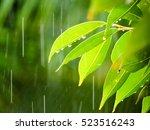 Wet Leaves In The Rain