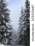 Small photo of Winter landscape/ snow covered alpine fir trees in a forest