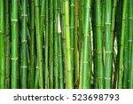 Green Bamboo Fence Backgroun...