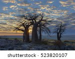 sun starburst at baobab tree | Shutterstock . vector #523820107