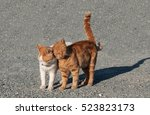 Small photo of Two amicable a kitten gently rub against each other