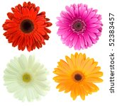 set of gerbera flowers | Shutterstock . vector #52383457