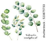 Watercolor Eucalyptus Set. Han...