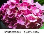 pink hydrangea detail | Shutterstock . vector #523934557