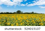 Sunflower Field On White Cloud...