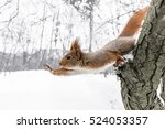 Stock photo cute young squirrel on tree with held out paw against blurred winter forest in background 524053357