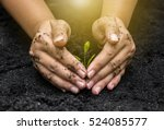 hands holding sapling in soil... | Shutterstock . vector #524085577