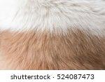 dog fur texture | Shutterstock . vector #524087473
