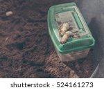 Image Of Rhinoceros Beetle...
