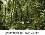Jungle In Bolivian Pre Mountai...
