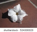 Cerbera Odollam Flower.
