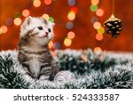 Stock photo curious scottish grey kitten sitting tinsel and looking at the pine cone with bokeh background of 524333587