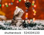 Stock photo curious scottish grey kitten sitting tinsel and looking at the pine cone with bokeh background of 524334133