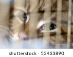 Cat In The Cage At Exhibition