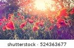 poppy flowers in sunlight.... | Shutterstock . vector #524363677