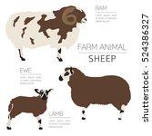 sheep farming infographic... | Shutterstock .eps vector #524386327
