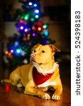 cute dog lying near the...   Shutterstock . vector #524398183