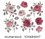 vintage roses set. watercolor... | Shutterstock . vector #524684647