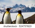 king penguins in fortuna bay on ... | Shutterstock . vector #524757823