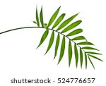 green leaves of palm tree on... | Shutterstock . vector #524776657