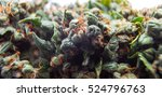 cannabis bud background ... | Shutterstock . vector #524796763
