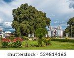 arbol del tule  a giant sacred... | Shutterstock . vector #524814163