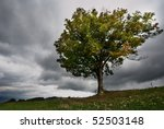 Landscape With Lonely Tree And...