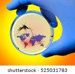 the study of viruses zika ... | Shutterstock . vector #525031783