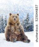 close wild brown bear in winter ... | Shutterstock . vector #525044857