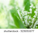 Lilly Of The Valley Flowers...