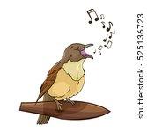 vector singing nightingale bird ... | Shutterstock .eps vector #525136723
