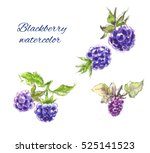 blackberry watercolor | Shutterstock . vector #525141523