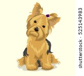 Yorkshire Terrier Dog At One...