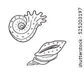 shell lineart | Shutterstock .eps vector #525203197