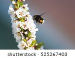 Small Striped Chubby Bumble Be...