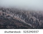 first snow on the tress. dark... | Shutterstock . vector #525290557