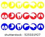 human organs   vector icons... | Shutterstock .eps vector #525331927