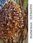 Closeup Of Colorful Dates Bunc...