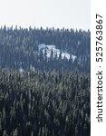 snowy pine landscape | Shutterstock . vector #525763867