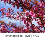 Plum tree foliage with shallow depth of field - stock photo