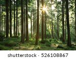 natural forest of spruce trees... | Shutterstock . vector #526108867