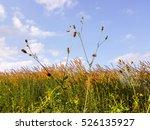 flowers grass fields with... | Shutterstock . vector #526135927
