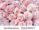 Stock photo pink roses as a background 526244917