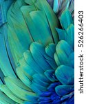 blue and green macaw feathers | Shutterstock . vector #526266403