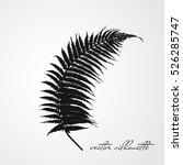 fern branch black silhouette... | Shutterstock .eps vector #526285747